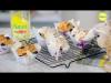 Embedded thumbnail for Muffins de yogur y arándanos